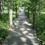 釧路市湿原展望台の遊歩道
