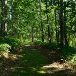 塘路湖畔歩道・フィトンチッドの森歩道
